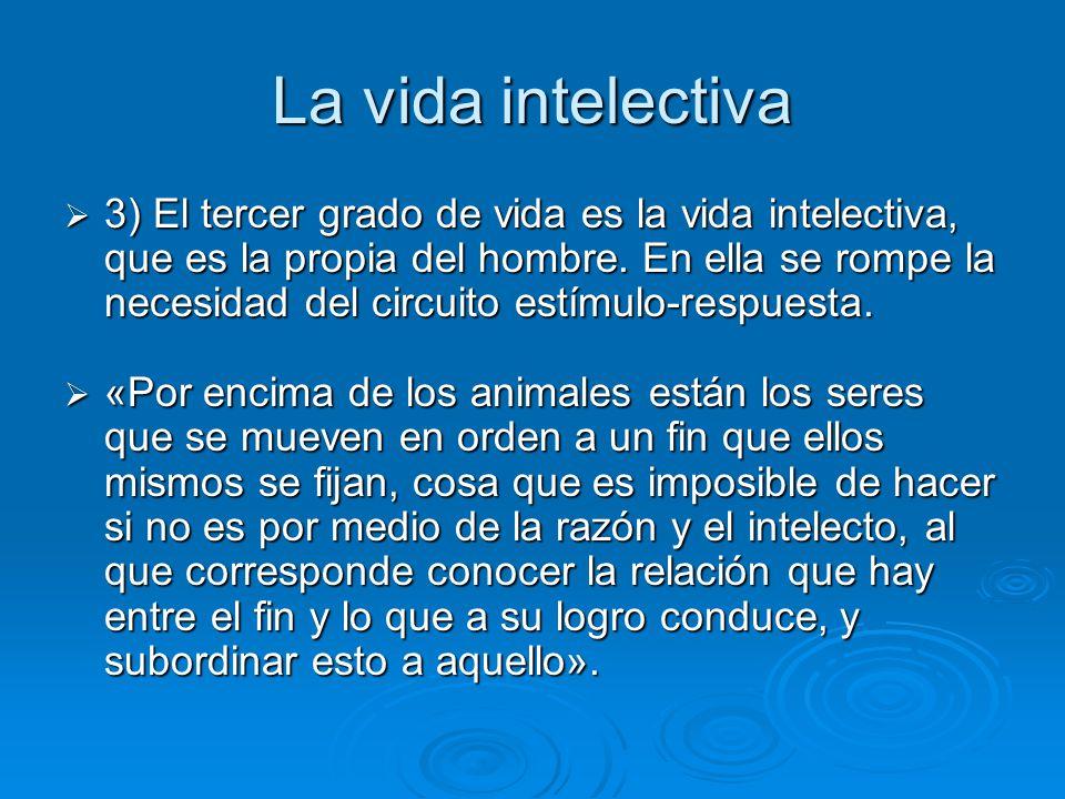 La vida intelectiva 3) El tercer grado de vida es la vida intelectiva, que es la propia del hombre. En ella se rompe la necesidad del circuito estímul
