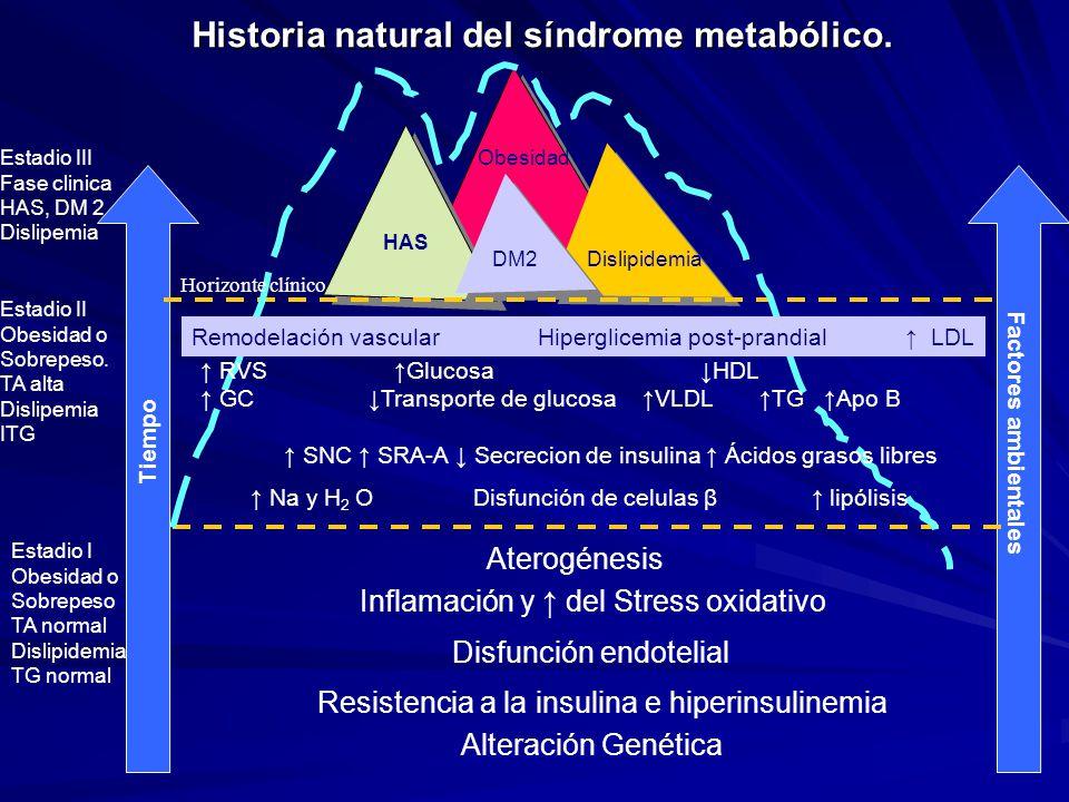Historia natural del síndrome metabólico. Alteración Genética Resistencia a la insulina e hiperinsulinemia Disfunción endotelial Inflamación y del Str