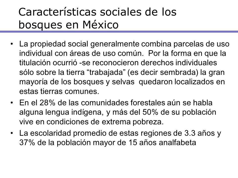 La propiedad social generalmente combina parcelas de uso individual con áreas de uso común. Por la forma en que la titulación ocurrió -se reconocieron