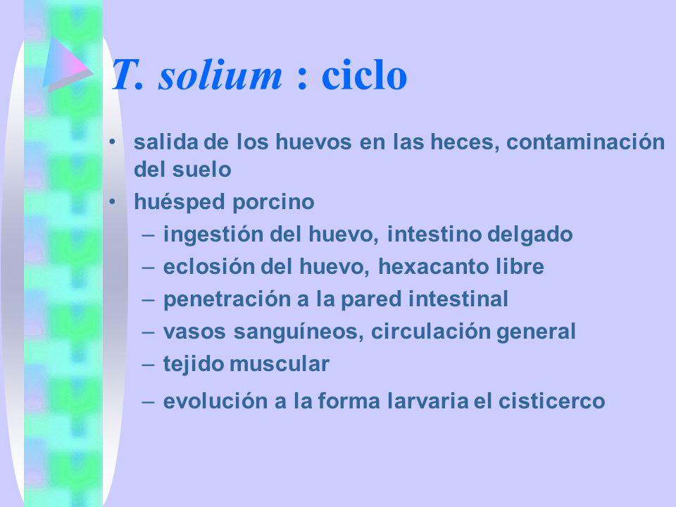 T. solium : ciclo salida de los huevos en las heces, contaminación del suelo huésped porcino –ingestión del huevo, intestino delgado –eclosión del hue