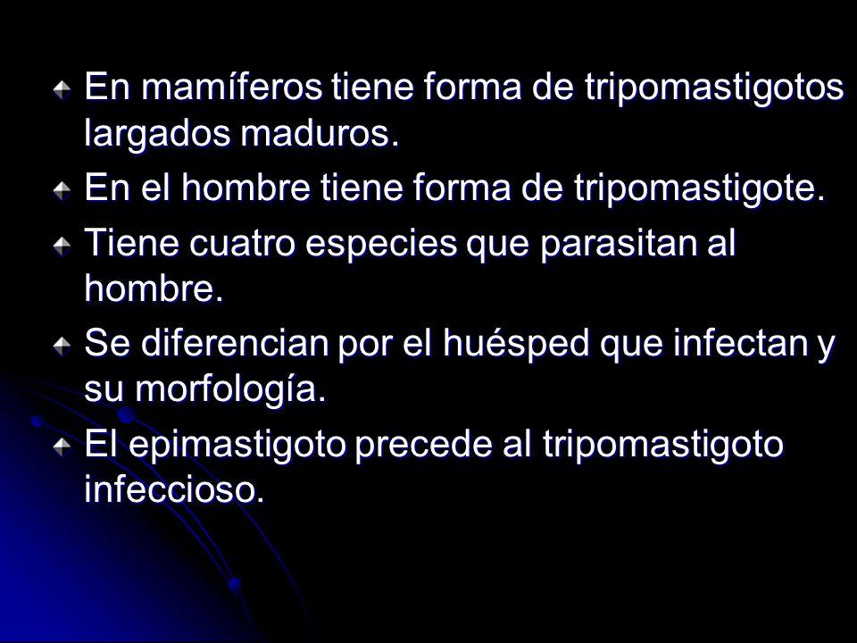 Tipos de trypanosoma T. bruceli. T. b. rodesiense. T. b. gambiense. T. cruzi. T. rangeli.
