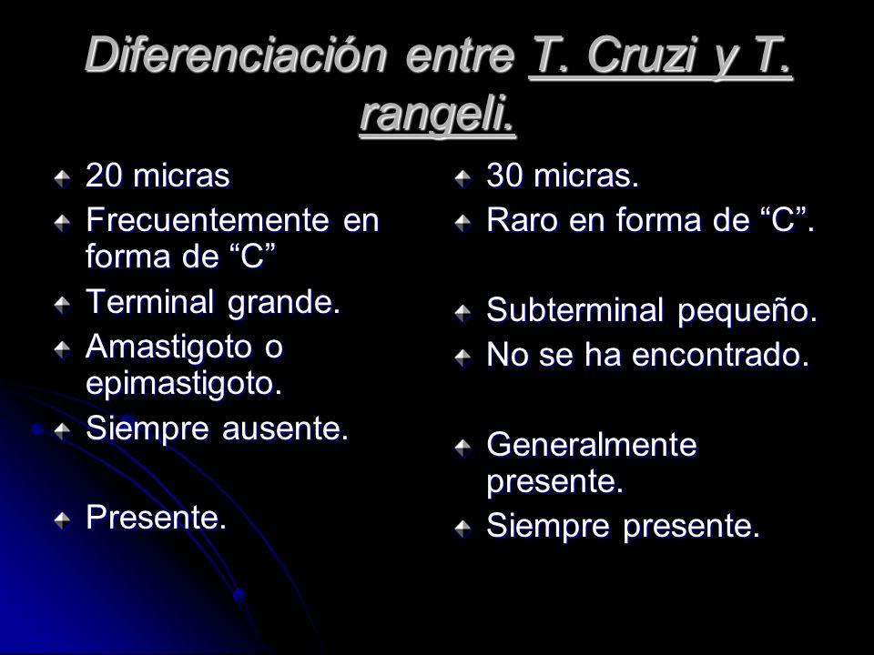 Diferenciación entre T.Cruzi y T. rangeli. 20 micras Frecuentemente en forma de C Terminal grande.