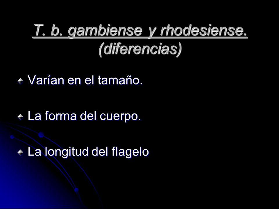 Tripanosoma gambiense Tripanosoma rhodesiense