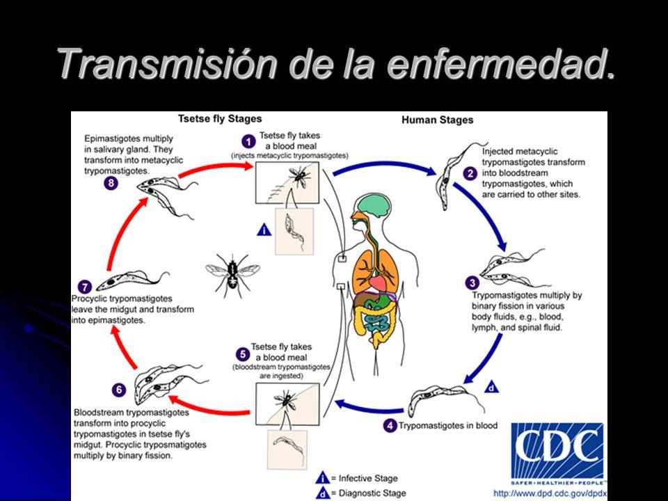 Sintomas Color rojo en el lugar de la inoculación.