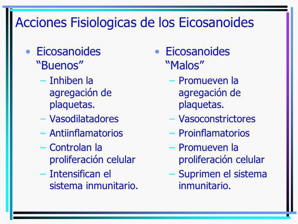 Acciones Fisiologicas de los Eicosanoides Eicosanoides Buenos –Inhiben la agregación de plaquetas. –Vasodilatadores –Antiinflamatorios –Controlan la p