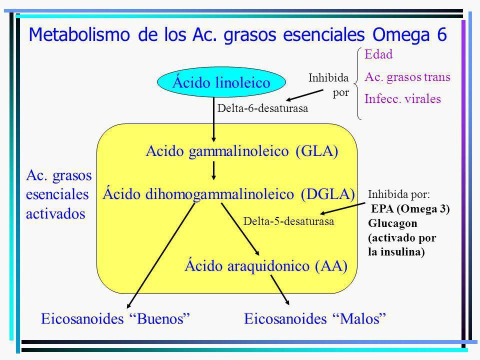 Metabolismo de los Ac. grasos esenciales Omega 6 Ac. grasos esenciales activados Ácido linoleico Acido gammalinoleico (GLA) Ácido dihomogammalinoleico