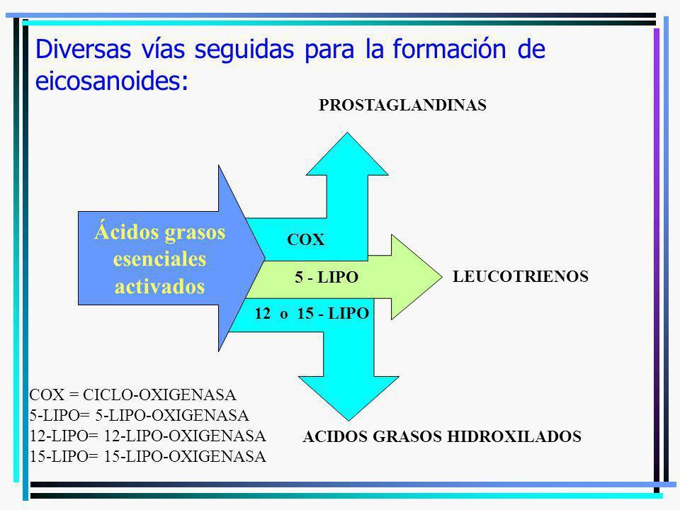 5 - LIPO COX Diversas vías seguidas para la formación de eicosanoides: Ácidos grasos esenciales activados PROSTAGLANDINAS LEUCOTRIENOS 12 o 15 - LIPO
