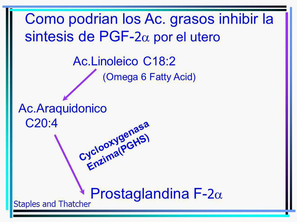 Ac.Linoleico C18:2 (Omega 6 Fatty Acid) Ac.Araquidonico C20:4 Prostaglandina F- 2 Como podrian los Ac. grasos inhibir la sintesis de PGF- 2 por el ute