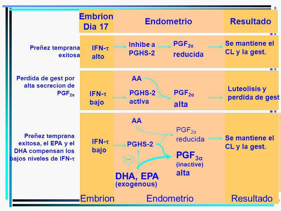 Inhibe a PGHS-2 PGF 2α reducida AA PGHS-2 PGF 2α reducida AA DHA, EPA PGF 3α (inactive) alta (exogenous) IFN- alto IFN- bajo EmbrionEndometrio Se mant