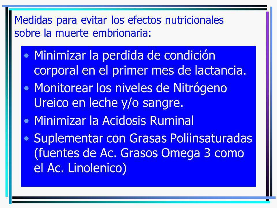 Medidas para evitar los efectos nutricionales sobre la muerte embrionaria: Minimizar la perdida de condición corporal en el primer mes de lactancia. M