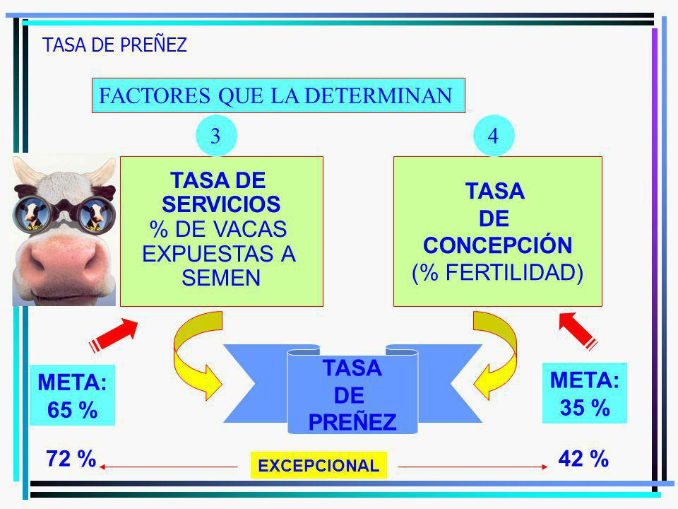 TASA DE PREÑEZ FACTORES QUE LA DETERMINAN TASA DE SERVICIOS % DE VACAS EXPUESTAS A SEMEN TASA DE CONCEPCIÓN (% FERTILIDAD) TASA DE PREÑEZ 34 META: 65