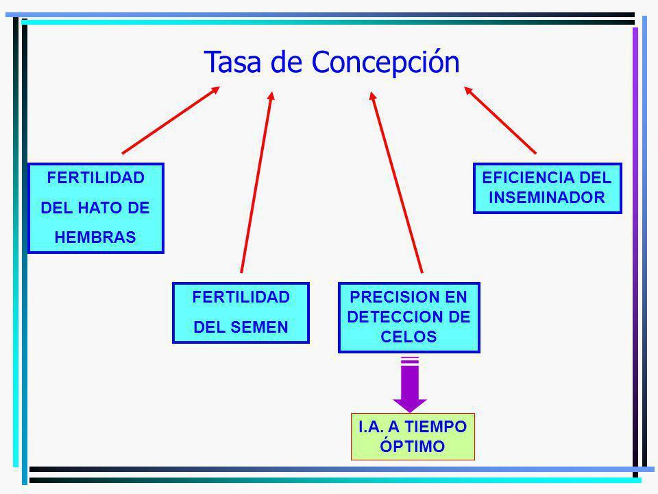 Tasa de Concepción FERTILIDAD DEL HATO DE HEMBRAS FERTILIDAD DEL SEMEN PRECISION EN DETECCION DE CELOS EFICIENCIA DEL INSEMINADOR I.A. A TIEMPO ÓPTIMO