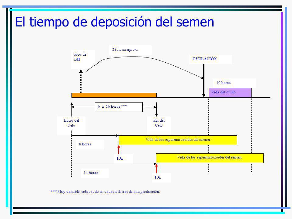 El tiempo de deposición del semen Inicio del Celo Fin del Celo Pico de LH 6 a 16 horas *** OVULACIÓN 28 horas aprox. Vida del óvulo 10 horas Vida de l
