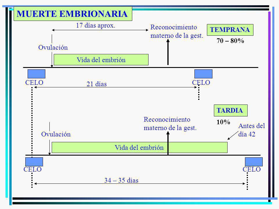 CELO Ovulación Reconocimiento materno de la gest. CELO Vida del embrión CELO Reconocimiento materno de la gest. Vida del embrión Ovulación CELO 17 día