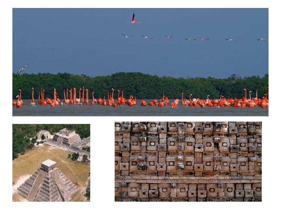 CALAKMUL En medio de la biosfera del mismo nombre es considerada la mayor ciudad maya descubierta hasta la fecha.