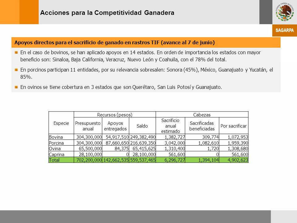 Acciones para la Competitividad Ganadera Apoyos directos para el sacrificio de ganado en rastros TIF (avance al 7 de junio) En el caso de bovinos, se