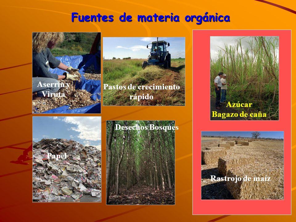 Aserrín y Viruta Pastos de crecimiento rápido Rastrojo de maíz Azúcar Bagazo de caña Desechos Bosques Papel Fuentes de materia orgánica