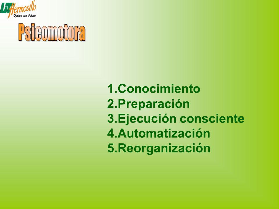 1.Conocimiento 2.Preparación 3.Ejecución consciente 4.Automatización 5.Reorganización