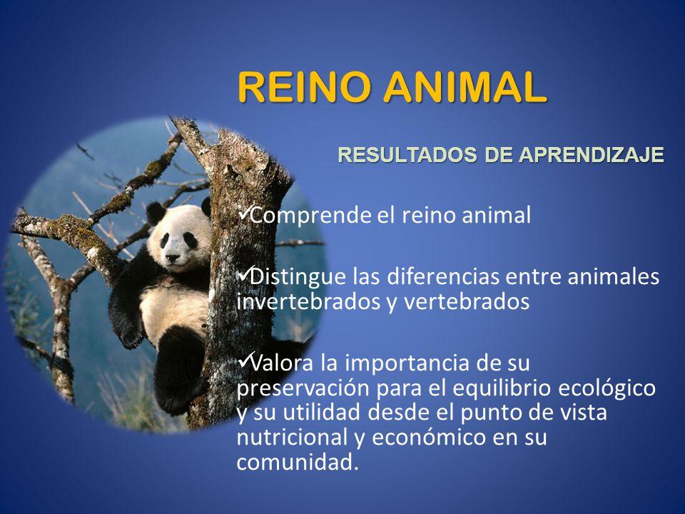 REINO ANIMAL RESULTADOS DE APRENDIZAJE Comprende el reino animal Distingue las diferencias entre animales invertebrados y vertebrados Valora la import