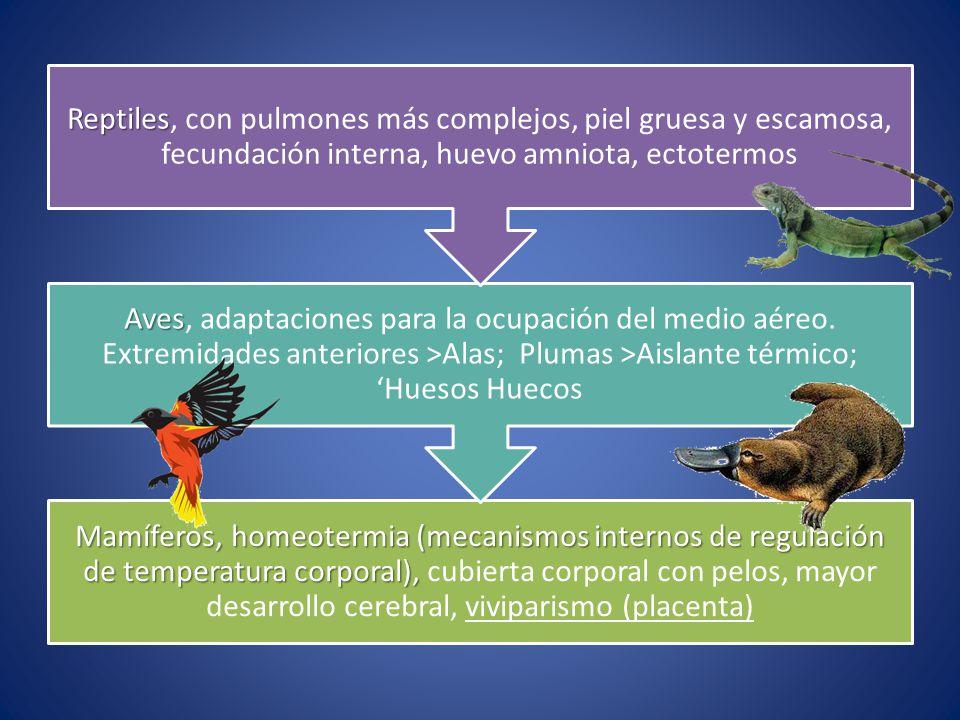 Mamíferos, homeotermia (mecanismos internos de regulación de temperatura corporal), Mamíferos, homeotermia (mecanismos internos de regulación de tempe