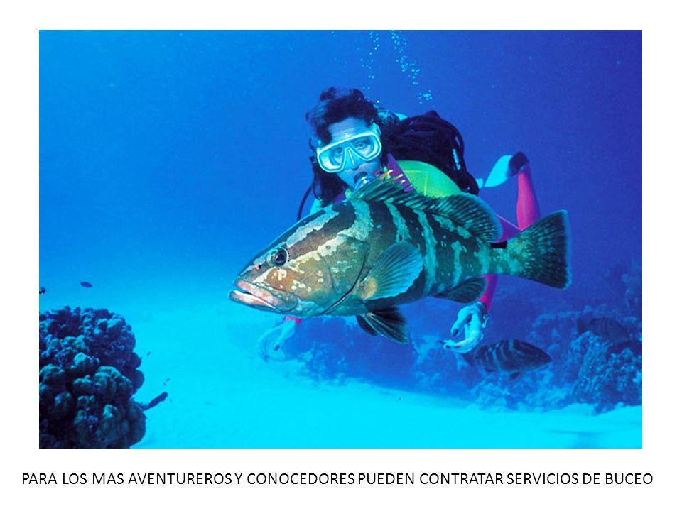 PARA LOS MAS AVENTUREROS Y CONOCEDORES PUEDEN CONTRATAR SERVICIOS DE BUCEO