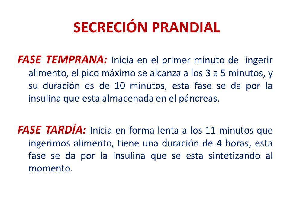 SECRECIÓN PRANDIAL FASE TEMPRANA: Inicia en el primer minuto de ingerir alimento, el pico máximo se alcanza a los 3 a 5 minutos, y su duración es de 1