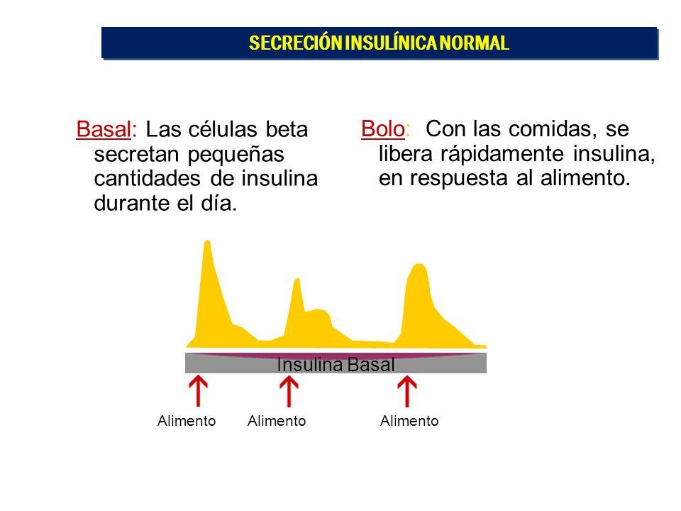 Alimento Bolo: Con las comidas, se libera rápidamente insulina, en respuesta al alimento. Basal: Las células beta secretan pequeñas cantidades de insu