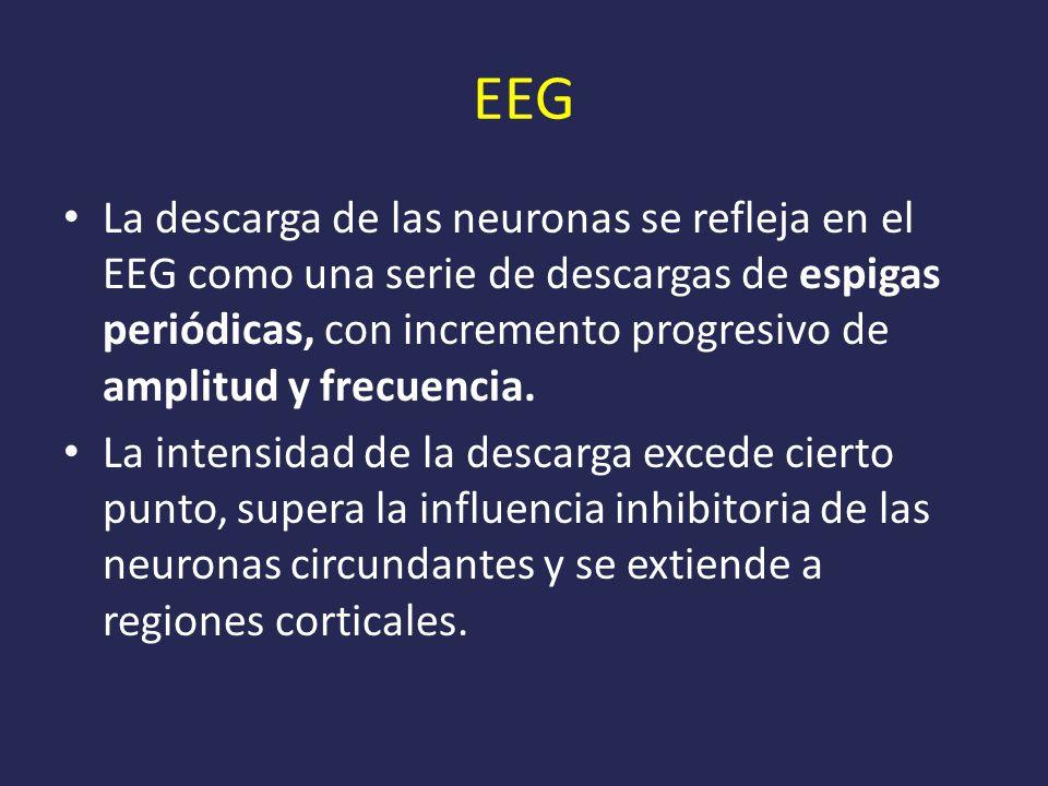 EEG La descarga de las neuronas se refleja en el EEG como una serie de descargas de espigas periódicas, con incremento progresivo de amplitud y frecuencia.