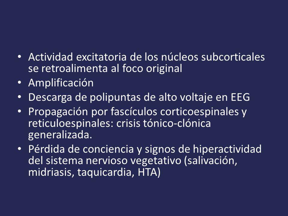 Actividad excitatoria de los núcleos subcorticales se retroalimenta al foco original Amplificación Descarga de polipuntas de alto voltaje en EEG Propagación por fascículos corticoespinales y reticuloespinales: crisis tónico-clónica generalizada.
