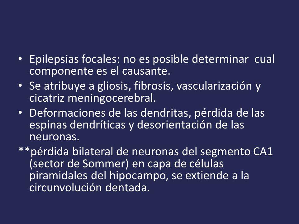 Epilepsias focales: no es posible determinar cual componente es el causante.