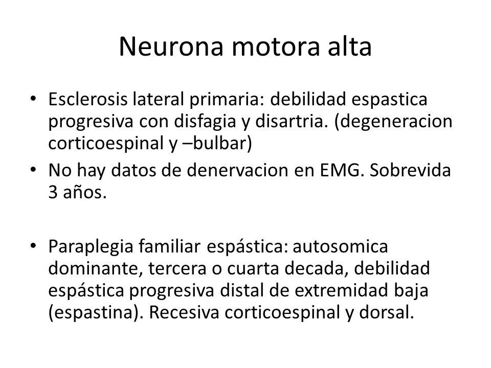 Neurona motora alta Esclerosis lateral primaria: debilidad espastica progresiva con disfagia y disartria. (degeneracion corticoespinal y –bulbar) No h