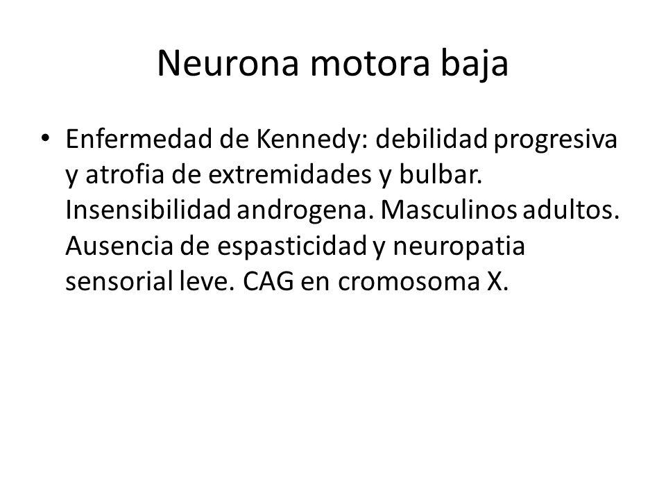 Neurona motora baja Enfermedad de Kennedy: debilidad progresiva y atrofia de extremidades y bulbar. Insensibilidad androgena. Masculinos adultos. Ause