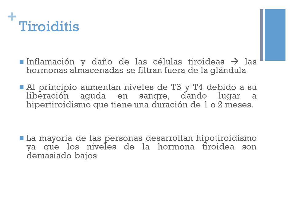 + Tiroiditis Inflamación y daño de las células tiroideas las hormonas almacenadas se filtran fuera de la glándula Al principio aumentan niveles de T3