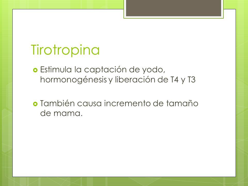 Tirotropina Estimula la captación de yodo, hormonogénesis y liberación de T4 y T3 También causa incremento de tamaño de mama.