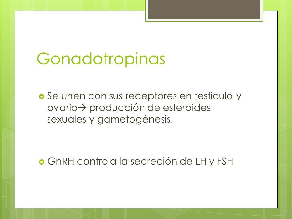 Gonadotropinas Se unen con sus receptores en testículo y ovario producción de esteroides sexuales y gametogénesis. GnRH controla la secreción de LH y