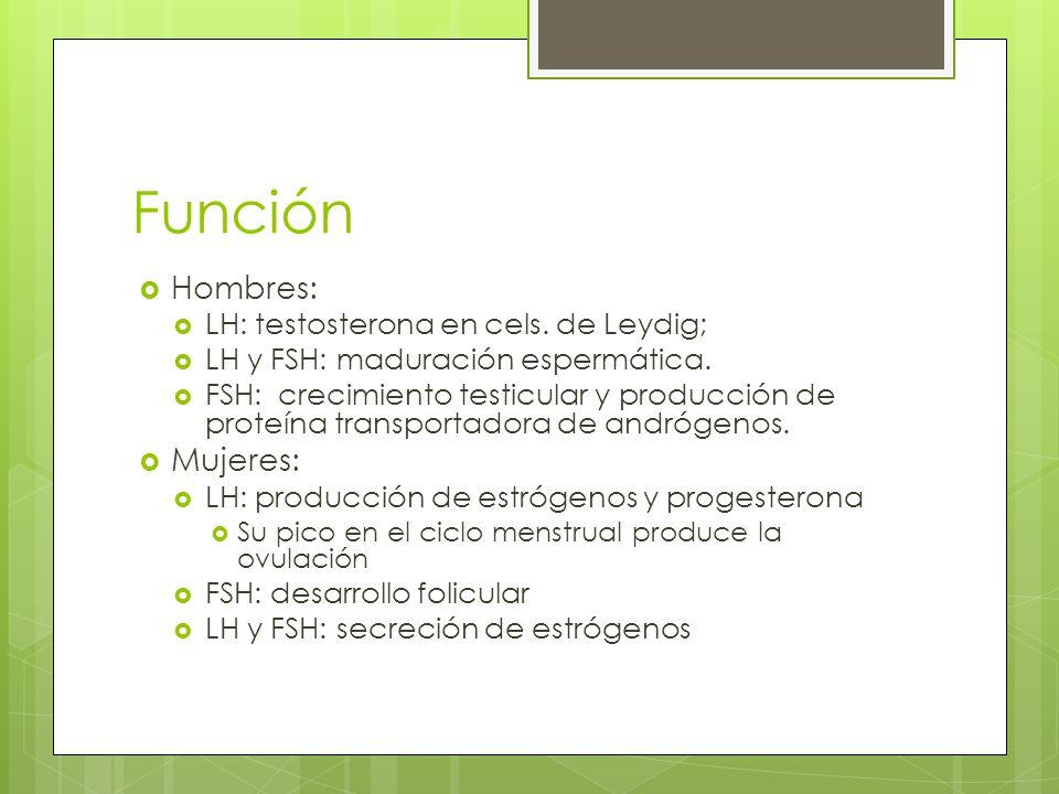 Función Hombres: LH: testosterona en cels. de Leydig; LH y FSH: maduración espermática. FSH: crecimiento testicular y producción de proteína transport