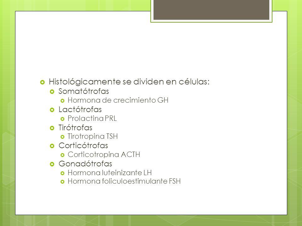 Histológicamente se dividen en células: Somatótrofas Hormona de crecimiento GH Lactótrofas Prolactina PRL Tirótrofas Tirotropina TSH Corticótrofas Cor