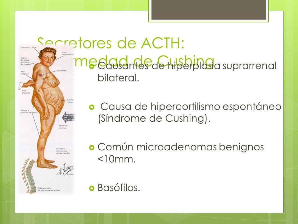 Secretores de ACTH: enfermedad de Cushing Causantes de hiperplasia suprarrenal bilateral. Causa de hipercortilismo espontáneo (Síndrome de Cushing). C