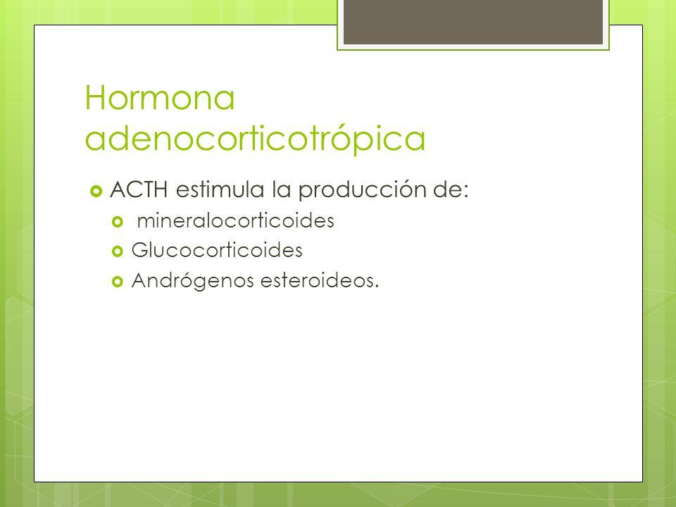 Hormona adenocorticotrópica ACTH estimula la producción de: mineralocorticoides Glucocorticoides Andrógenos esteroideos.