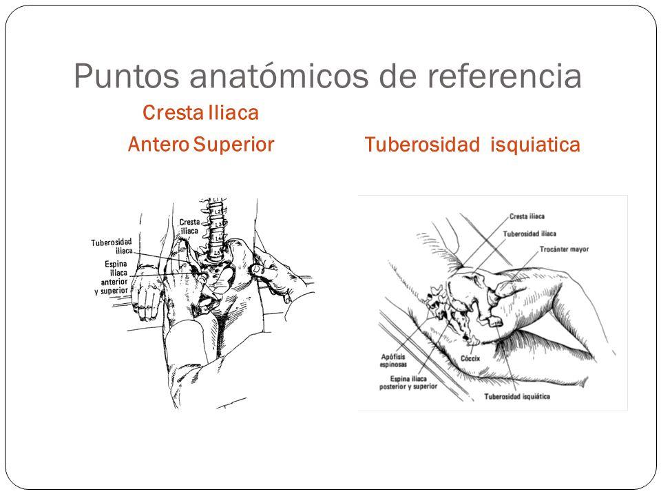 Puntos anatómicos de referencia Cresta Iliaca Antero Superior Tuberosidad isquiatica