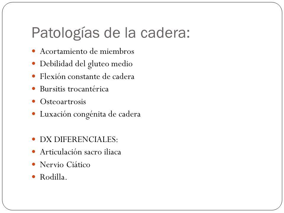 Patologías de la cadera: Acortamiento de miembros Debilidad del gluteo medio Flexión constante de cadera Bursitis trocantérica Osteoartrosis Luxación