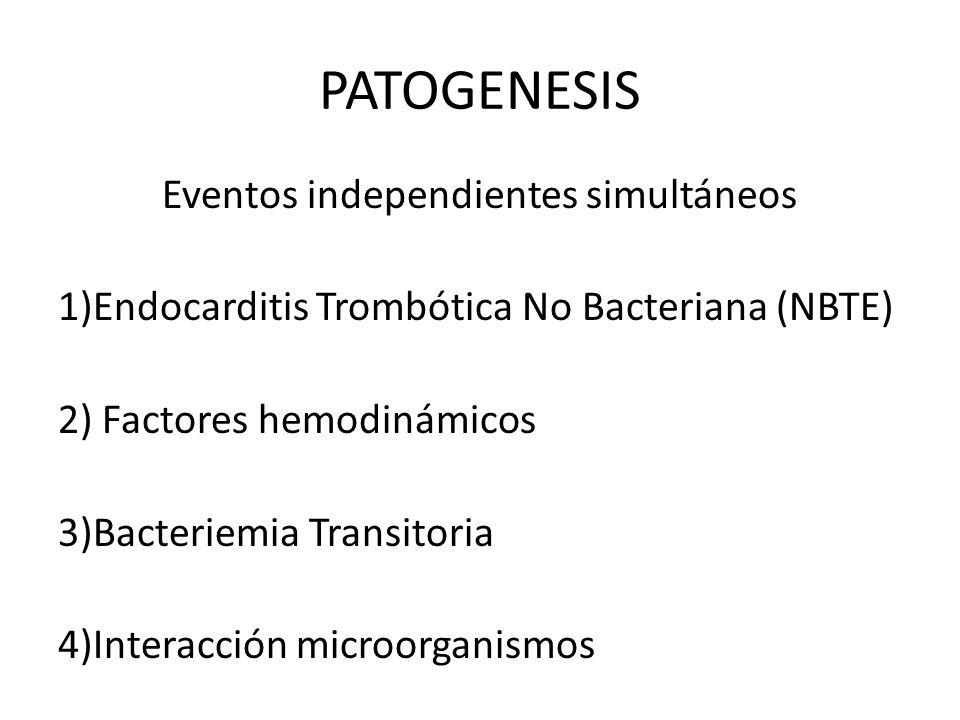 PATOGENESIS Eventos independientes simultáneos 1)Endocarditis Trombótica No Bacteriana (NBTE) 2) Factores hemodinámicos 3)Bacteriemia Transitoria 4)In