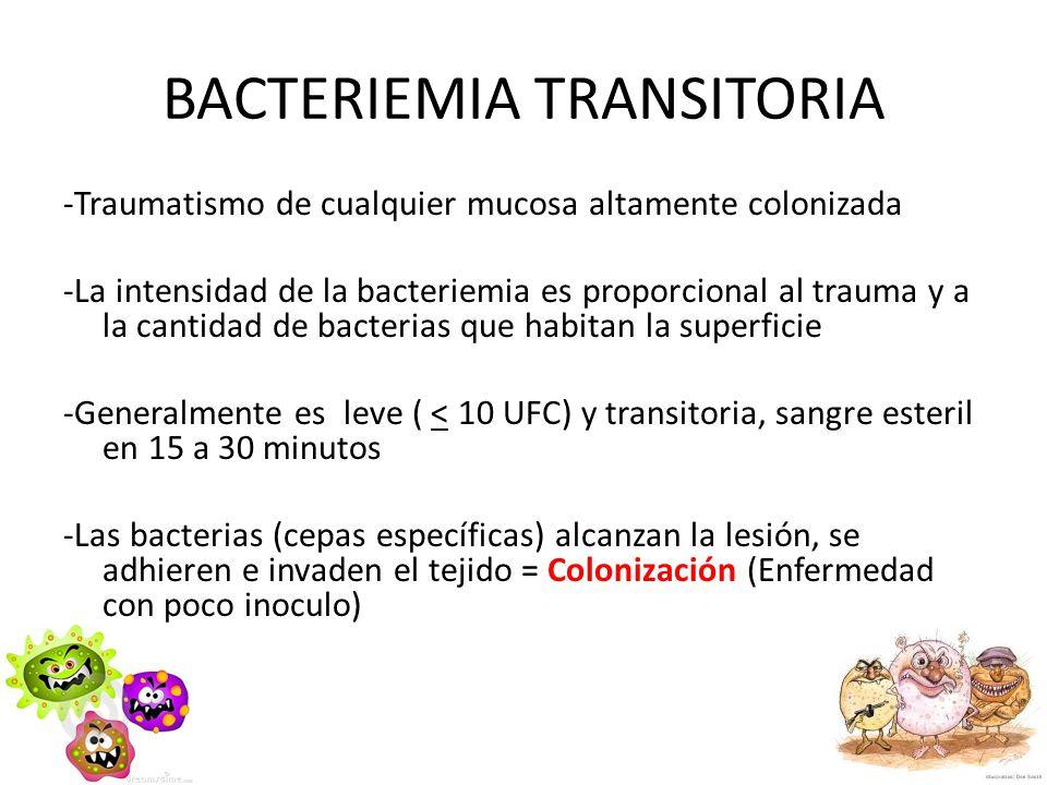 BACTERIEMIA TRANSITORIA -Traumatismo de cualquier mucosa altamente colonizada -La intensidad de la bacteriemia es proporcional al trauma y a la cantid