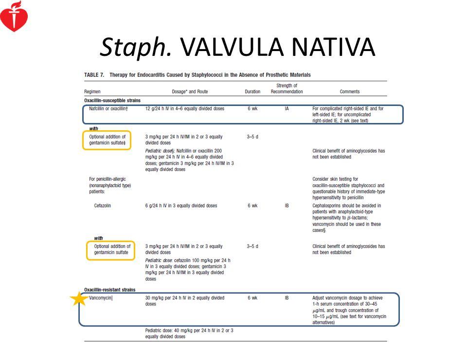 Staph. VALVULA NATIVA