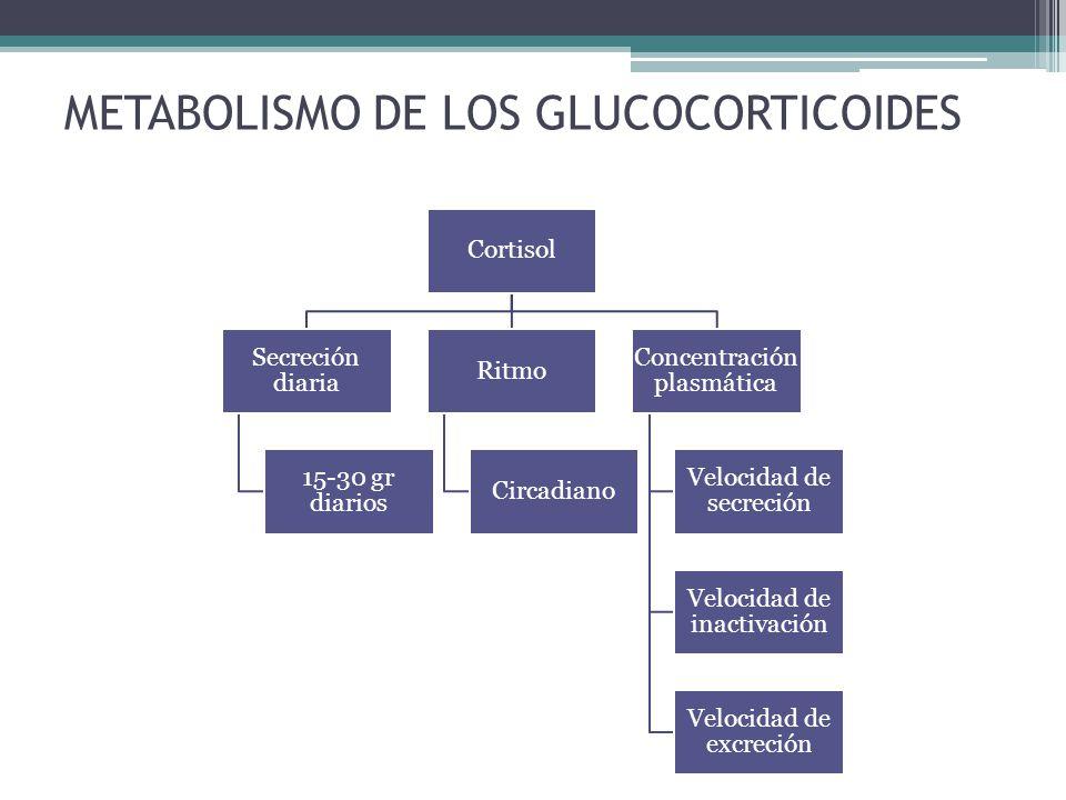 METABOLISMO DE LOS GLUCOCORTICOIDES Cortisol Secreción diaria 15-30 gr diarios Ritmo Circadiano Concentración plasmática Velocidad de secreción Veloci