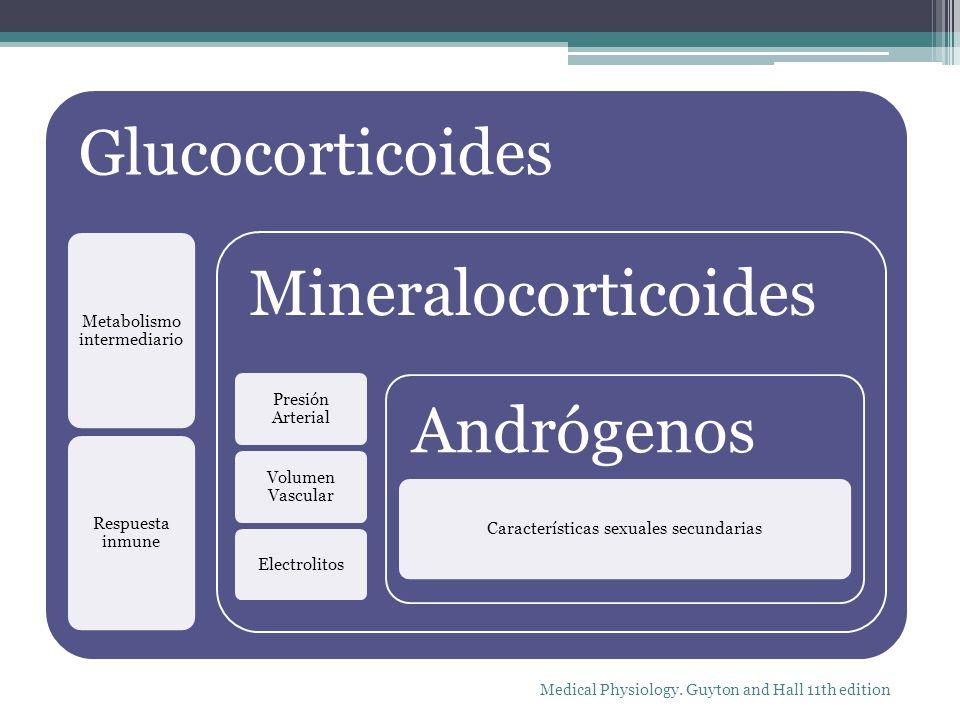 Glucocorticoides Metabolismo intermediario Respuesta inmune Mineralocorticoides Presión Arterial Volumen Vascular Electrolitos Andrógenos Característi