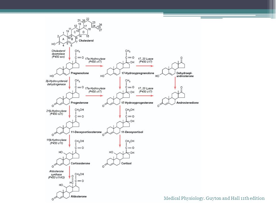 Adrenal Corticosteroid Biosynthesis, Metabolism, and Action. Endocrinol Metab Clin N Am 05