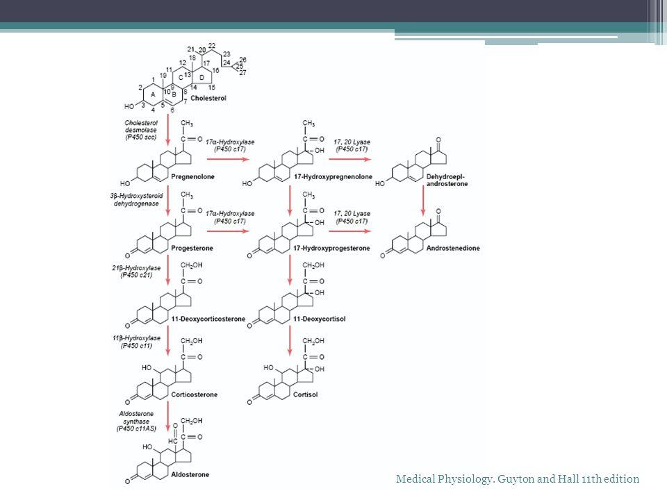 HIPERCORTISOLISMO Síndrome de Cushing endógeno Incremento del cortisol por las adrenales Cualquier causa En la mayoría hay hiperplasia adrenal bilateral Hipersecreción de ACTH Pituitaria Ectópica Harrisons Principles of Internal Medicine 17th edition