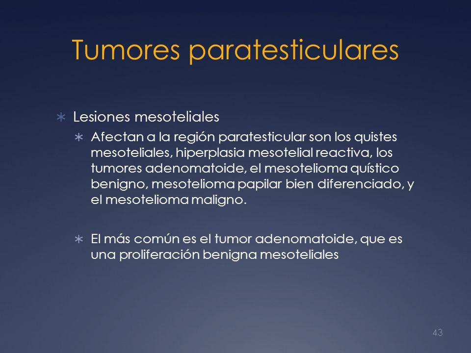 Tumores paratesticulares Lesiones mesoteliales Afectan a la región paratesticular son los quistes mesoteliales, hiperplasia mesotelial reactiva, los t