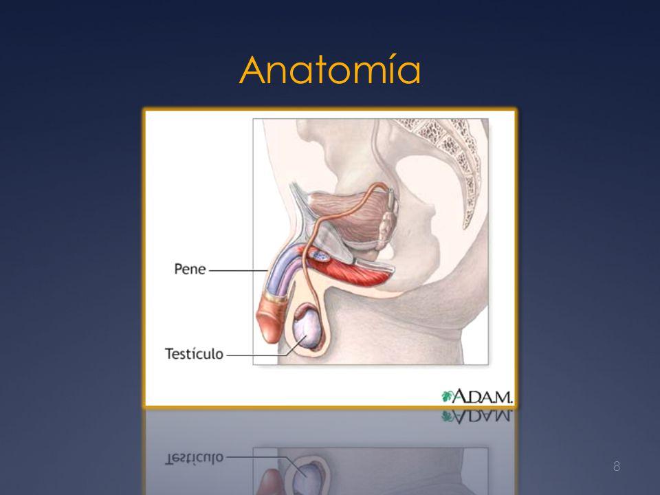 Seminoma avanzado Los hombres que tienen ganglios linfáticos retroperitoneales> 5 cm de diámetro al momento del diagnóstico (enfermedad en estadio IIC) Recaen después de RT adyuvante generalmente Se tratan con quimioterapia basada en cisplatino.